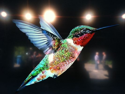 Google Hummingbird Update - Strong Automotive