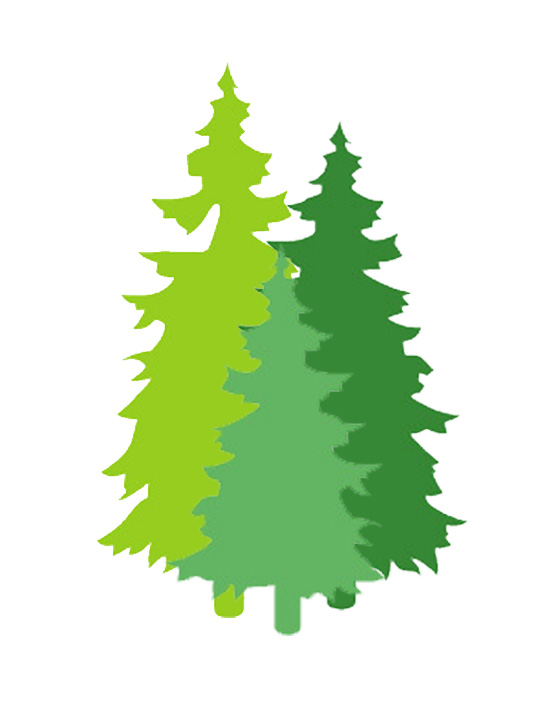 Evergreen Trees - Strong Automotive